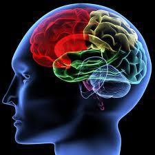 Les effets de la méditation de pleine conscience sont visibles par imagerie cérébrale !