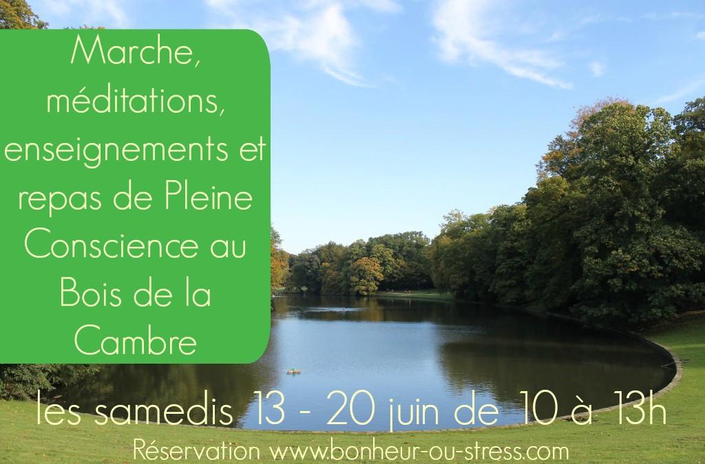 Marche, méditations, enseignements et repas au Bois de la Cambre